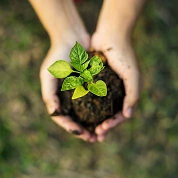 Développement durable chez Do it + Garden
