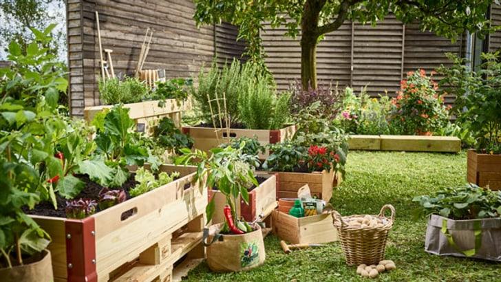 Jardinières surélevées