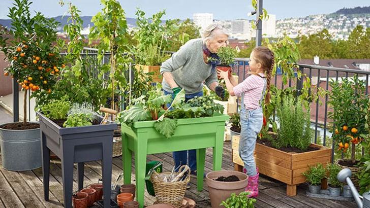 Jardinières surélevées sur la terrasse