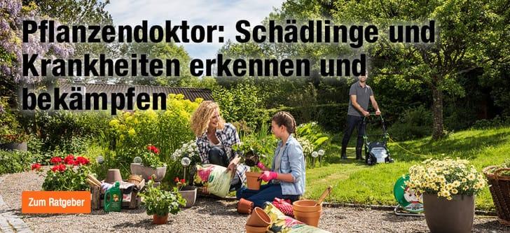 Pflanzenpflege & Gartenpfelge