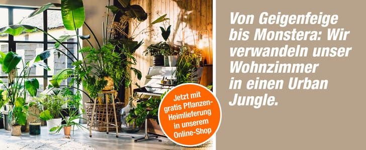 DIT_008108-00_E-Shop_Themenbuehne_Desktop_UrbanJungle_KW34-42_2021_2560x1050px_DE.jpg