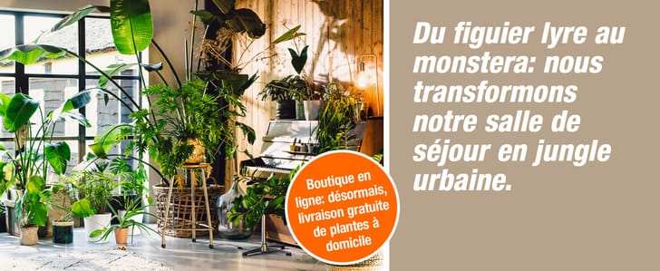 DIT_008108-00_E-Shop_Themenbuehne_Desktop_UrbanJungle_KW34-42_2021_2560x1050px_FR.jpg