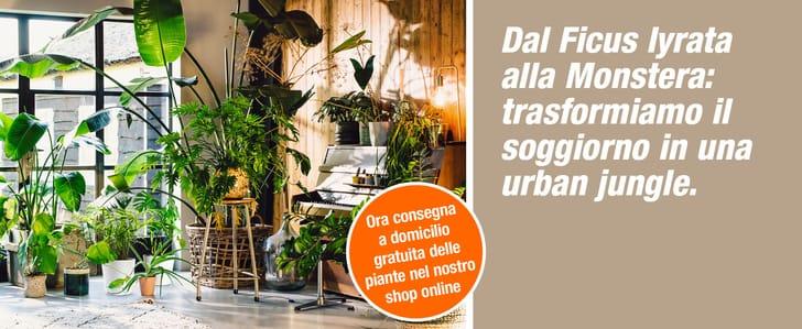 DIT_008108-00_E-Shop_Themenbuehne_Desktop_UrbanJungle_KW34-42_2021_2560x1050px_IT.jpg