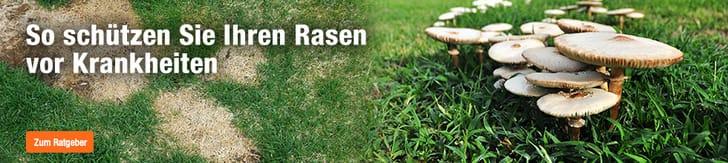 Krankheiten im Rasen